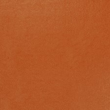 Pumpkin Solid Decorator Fabric by Trend